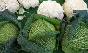 Pregnancy nutrition cabbage