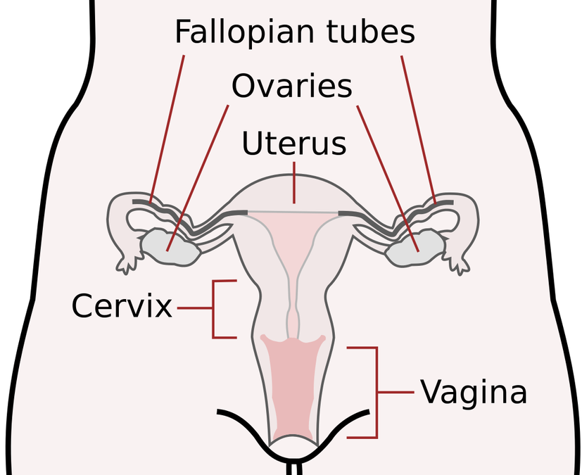 Pregnancy And Cervical Insufficiency – Learn About The Causes And Find Out What You Can Do