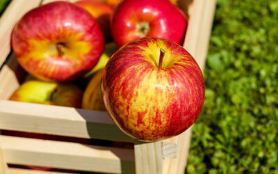 Apples in pregnancy-10 potential benefits