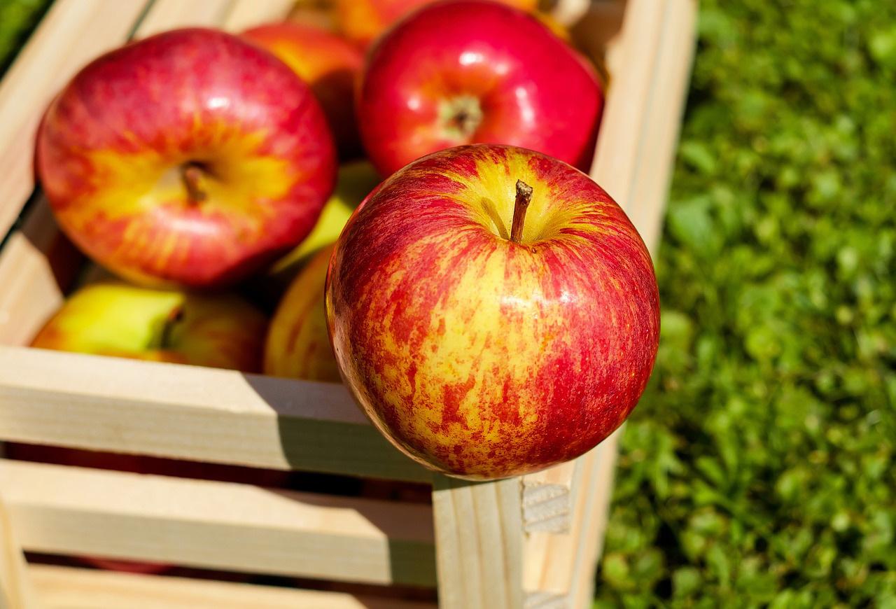 apples in pregnancy