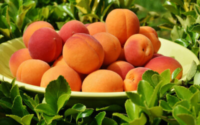 Apricots in pregnancy-10 nutritional benefits