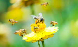 pregnancy and DNA bees royal jelly